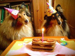 dog-cake-ingredients-tangylife