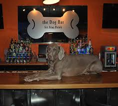 dog bar tangylife