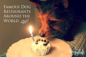 famous-dog-restaurants-tangylife