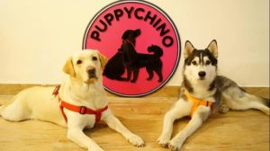 puppychino tangylife
